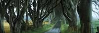 Road at the Dark Hedges, Armoy, County Antrim, Northern Ireland Fine-Art Print