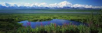 Fireweed flowers in bloom by lake, distant Mount McKinley and Alaska Range in clouds, Denali National Park, Alaska, USA. Fine-Art Print