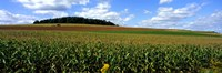 Field Of Corn With Tractor In Distance, Carroll County, Maryland, USA Fine-Art Print
