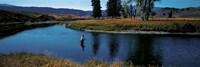 Trout fisherman Slough Creek Yellowstone National Park WY Fine-Art Print