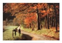 Autumn's Morning Light Fine-Art Print