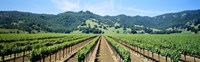 Napa Valley Vineyards Hopland, CA Fine-Art Print