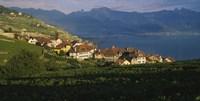 Village on a hillside, Rivaz, Lavaux, Switzerland Fine-Art Print