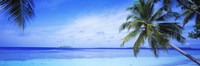 Ocean, Island, Water, Palm Trees, Maldives Fine-Art Print