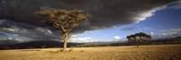 Tree w\storm clouds Tanzania Fine-Art Print
