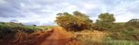 Dirt road passing through a agricultural field, Kauai, Hawaii, USA Fine-Art Print