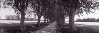 Road Through Trees, Provence, France Fine-Art Print