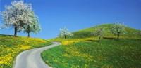 Winding Road Canton Switzerland Fine-Art Print
