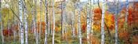 Fall Trees, Shinhodaka, Gifu, Japan Fine-Art Print