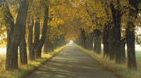 Road w/Autumn Trees Sweden Fine-Art Print