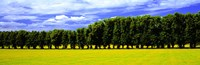 Row Of Trees, Uppland, Sweden Fine-Art Print