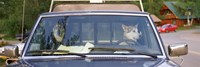 Close-up of two dogs in a pick-up truck, Main Street, Talkeetna, Alaska, USA Fine-Art Print
