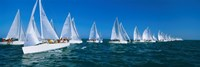 Sailboats racing in the ocean, Key West, Florida Fine-Art Print