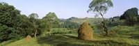 Haystack at the hillside, Transylvania, Romania Fine-Art Print