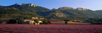 Lavender Fields And Farms, High Provence, La Drome, France Fine-Art Print