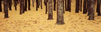 Low Section View Of Pine And Oak Trees, Cape Cod, Massachusetts, USA Fine-Art Print