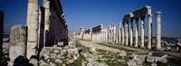 Old ruins on a landscape, Cardo Maximus, Apamea, Syria Fine-Art Print