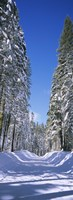Trees on both sides of a snow covered road, Crane Flat, Yosemite National Park, California (vertical) Fine-Art Print