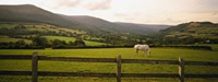 Horse in a field, Enniskerry, County Wicklow, Republic Of Ireland Fine-Art Print