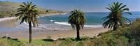 High angle view of palm trees on the beach, Refugio State Beach, Santa Barbara, California, USA Fine-Art Print
