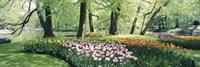 Flowers in a garden, Keukenhof Gardens, Netherlands Fine-Art Print