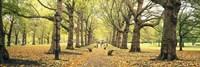 Trees along a footpath in a park, Green Park, London, England Fine-Art Print