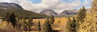 Trees in a field, US Glacier National Park, Montana, USA Fine-Art Print