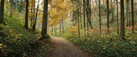 Road passing through a forest, Baden-Wurttemberg, Germany Fine-Art Print