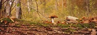 Mushroom on a tree trunk, Baden-Wurttemberg, Germany Fine-Art Print