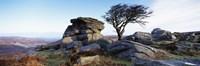 Bare tree near rocks, Haytor Rocks, Dartmoor, Devon, England Fine-Art Print