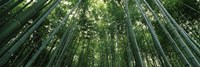 Low angle view of bamboo trees, Arashiyama, Kyoto Prefecture, Kinki Region, Honshu, Japan Fine-Art Print