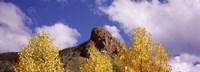 Clouds above aspen trees in autumn, Colorado Fine-Art Print