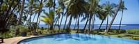Palm Trees in Maui, Hawaii (horizontal) Fine-Art Print