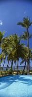 Palm Trees in Maui, Hawaii (vertical) Fine-Art Print