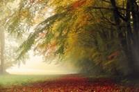 Your Beauty Silences Me Fine-Art Print
