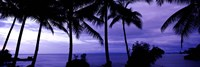 Palm trees on the coast, Colombia (purple horizontal) Fine-Art Print