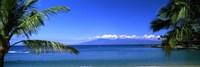 Palm trees on the beach, Kapalua Beach, Molokai, Maui, Hawaii, USA Fine-Art Print