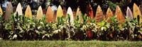 Surfboard fence in a garden, Maui, Hawaii, USA Fine-Art Print