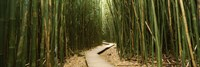 Wooden path surrounded by bamboo, Oheo Gulch, Seven Sacred Pools, Hana, Maui, Hawaii, USA Fine-Art Print