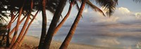 Palm trees on the beach at sunset, Rarotonga, Cook Islands Fine-Art Print