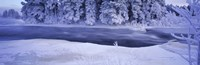River flowing through a snow covered forest, Dal River, Sweden Fine-Art Print