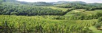 Vineyards in Chianti Region, Tuscany, Italy Fine-Art Print