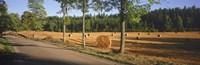 Hay bales in a field, Flens, Sweden Fine-Art Print