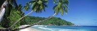 Palm trees on the beach, Anse Severe, La Digue Island, Seychelles Fine-Art Print