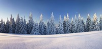 Snow covered trees on a landscape, Belchen Mountain, Black Forest, Baden-Wurttemberg, Germany Fine-Art Print
