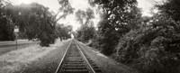 Railroad track, Napa Valley, California, USA Fine-Art Print