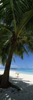 Palm tree on the beach, Aitutaki, Cook Islands Fine-Art Print