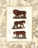African Animals IV Fine-Art Print
