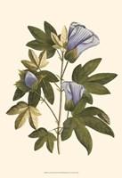 Lavender Floral II Fine-Art Print