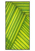 Line Study Green Fine-Art Print